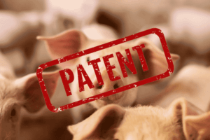 Patent EP1651777 auf Schweine für Newsham Choice Genetics, vorher Monsanto